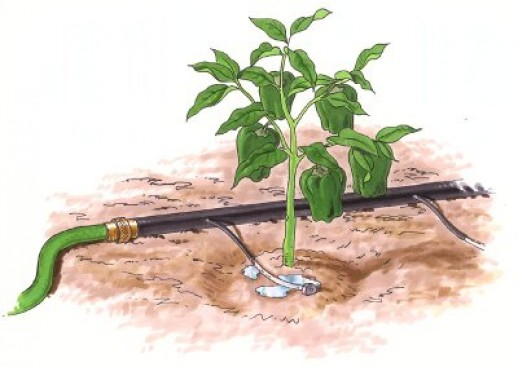 Drip Irrigation | Advantages and Disadvantages of Drip Irrigation watering a vegetable garden 3 e1337652363300