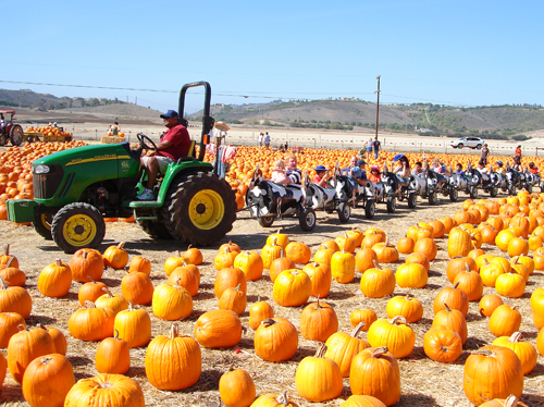 Pumpkin patches in ventura county | macaroni kid.